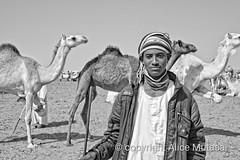 Ali: Omdurman camel market, SUDAN