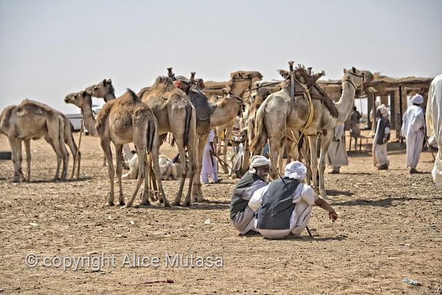 Omdurman camel market, SUDAN