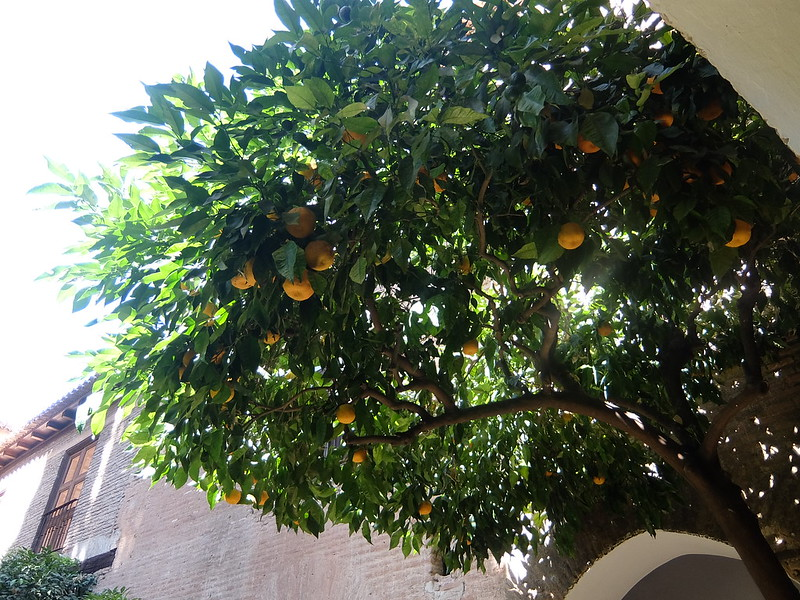 Альгамбра - Дворец Насридов - Апельсины в Кипарисовом дворе