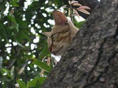 20190503-小貓在樹上3