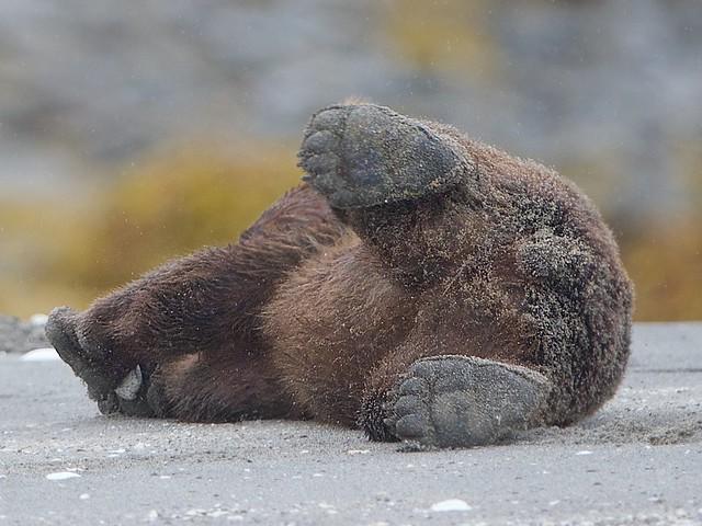 Baby Bear Paws