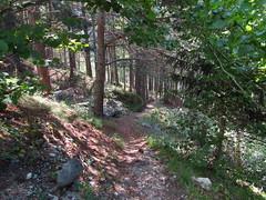SwissForest
