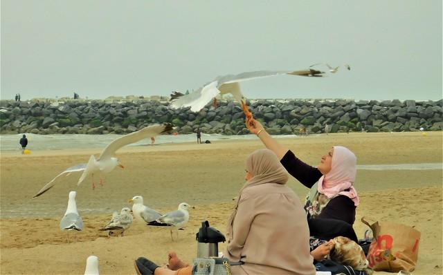 Moslima voert vliegende meeuw