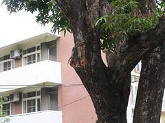 20190503-小貓在樹上2 拷貝
