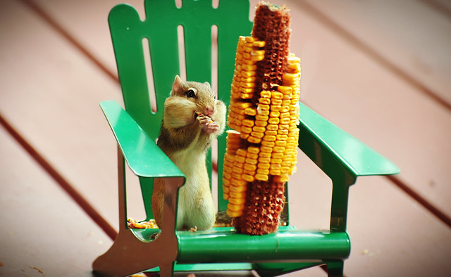 ~Corny Happiness!~