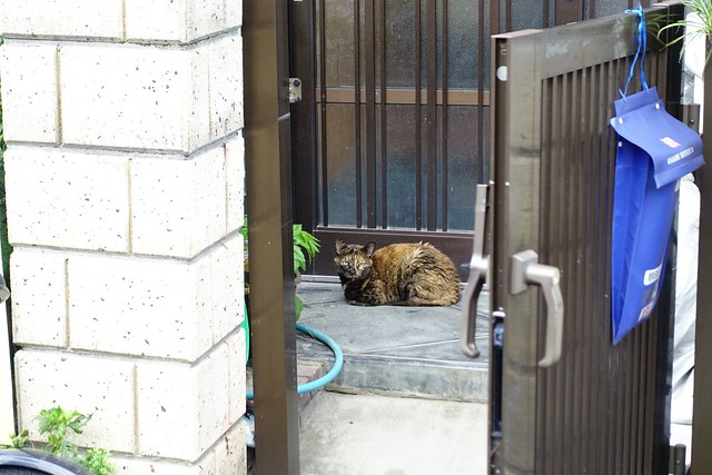 Today's Cat@2019-09-04