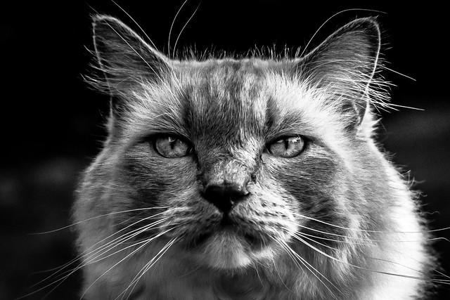 Portrait de Malice