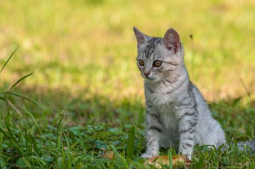 kitty kittens catsdogs animals animalplanet croatia vladoferencic hrvatskozagorje vladimirferencic klenovnik sigma15028macro nikond90