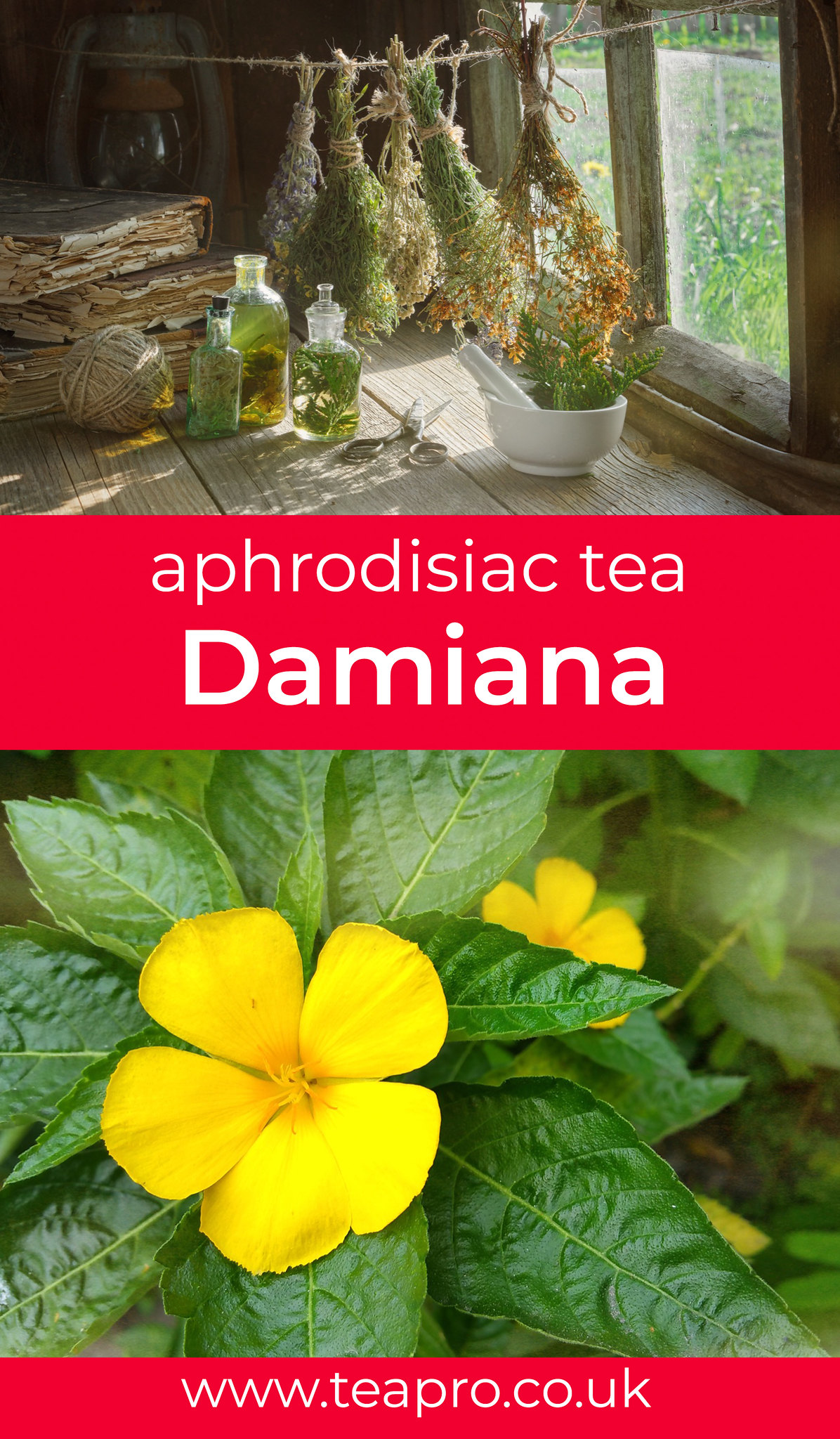 Damiana-ancient-love-potion