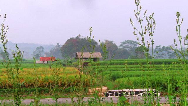 Rest for a moment on the edge of rice fields