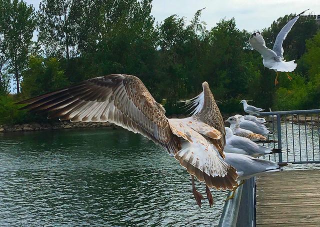 Seagull's beauty