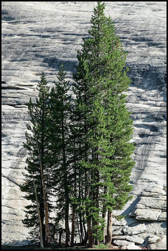 Trees Backed By Granite