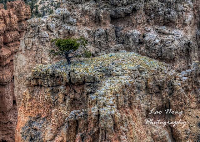 Bryce Lone Tree