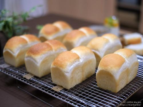ホシノミニ食パン 20190903-DSCT5815 (3)