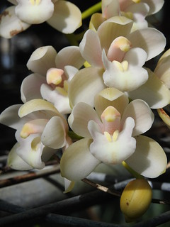 Small Pastel Orchids