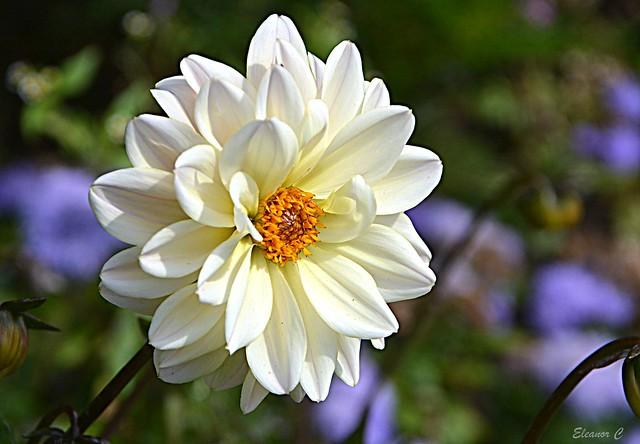Thursday`s Flower
