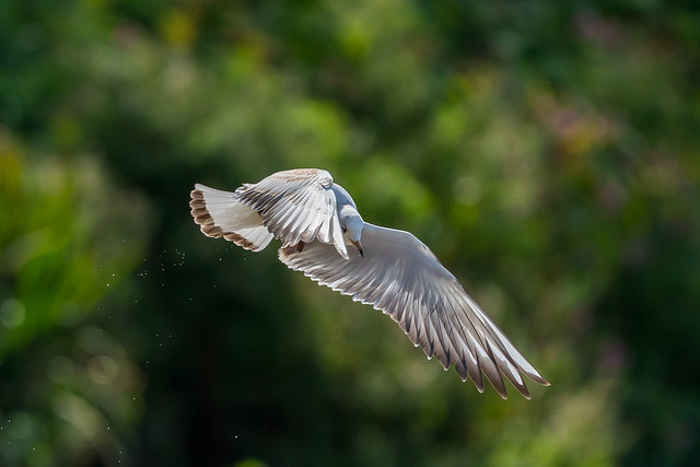 Aerial Ballet.......