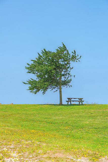 Bank Baum
