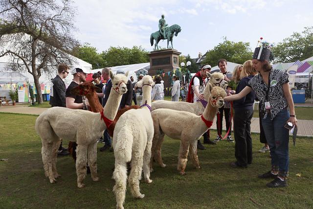 Schools Gala Day: Intergalactic Alpacas