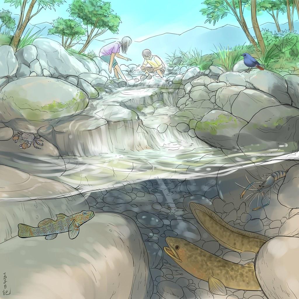 河海洄游的溪流生態保育