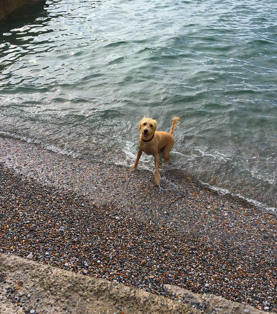 Arthur taking a dip