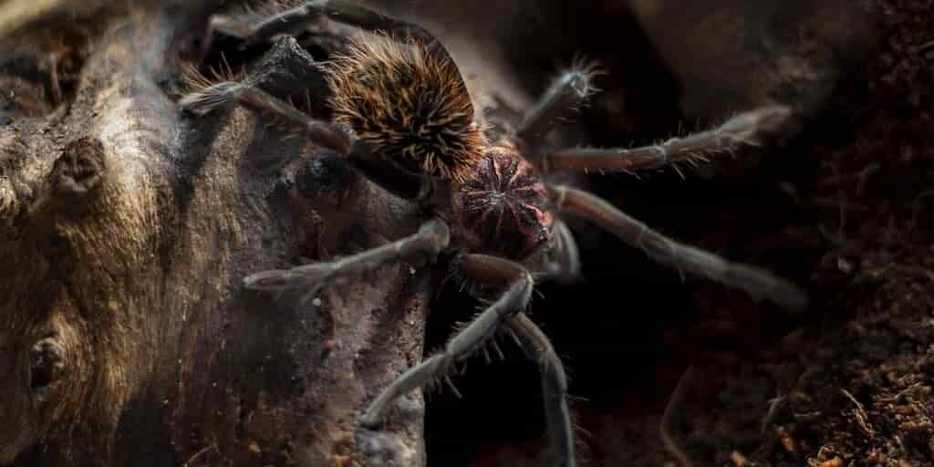 un-pesticide-venin-araignée-sans-danger-pour-les-abeilles