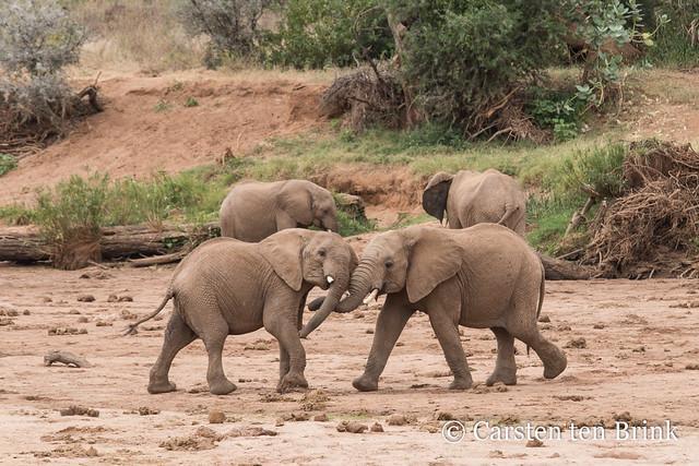 Samburu challenge