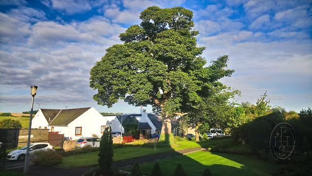 Chimney O'clock Shadow Gnomon Strikes The Tree 5 September 2018