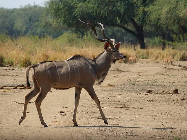 Lower Zambezi - Zambia 2019