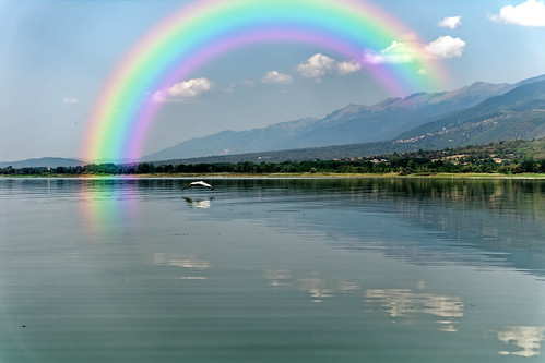 The Pelican And The Rainbow