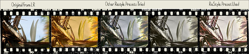 Filmstrip image of various ReStyle preset results