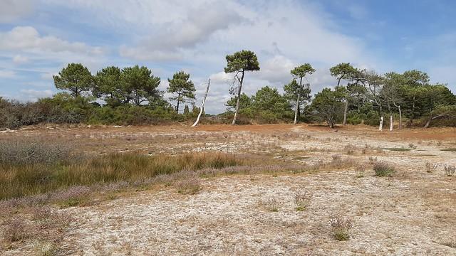 végétation sur la dune
