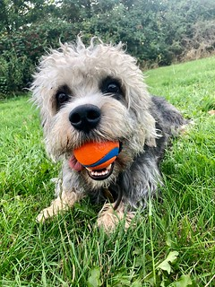 My ball !!
