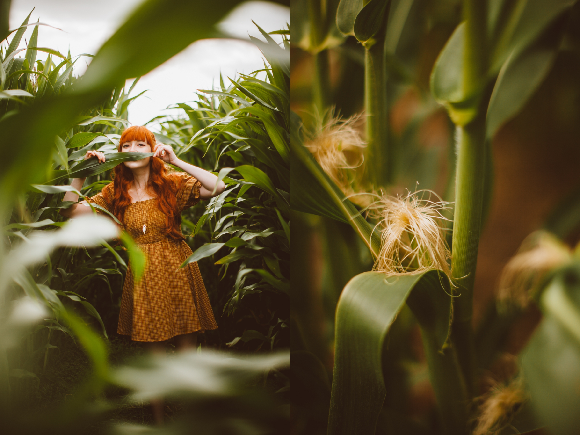 cornfield-11-side
