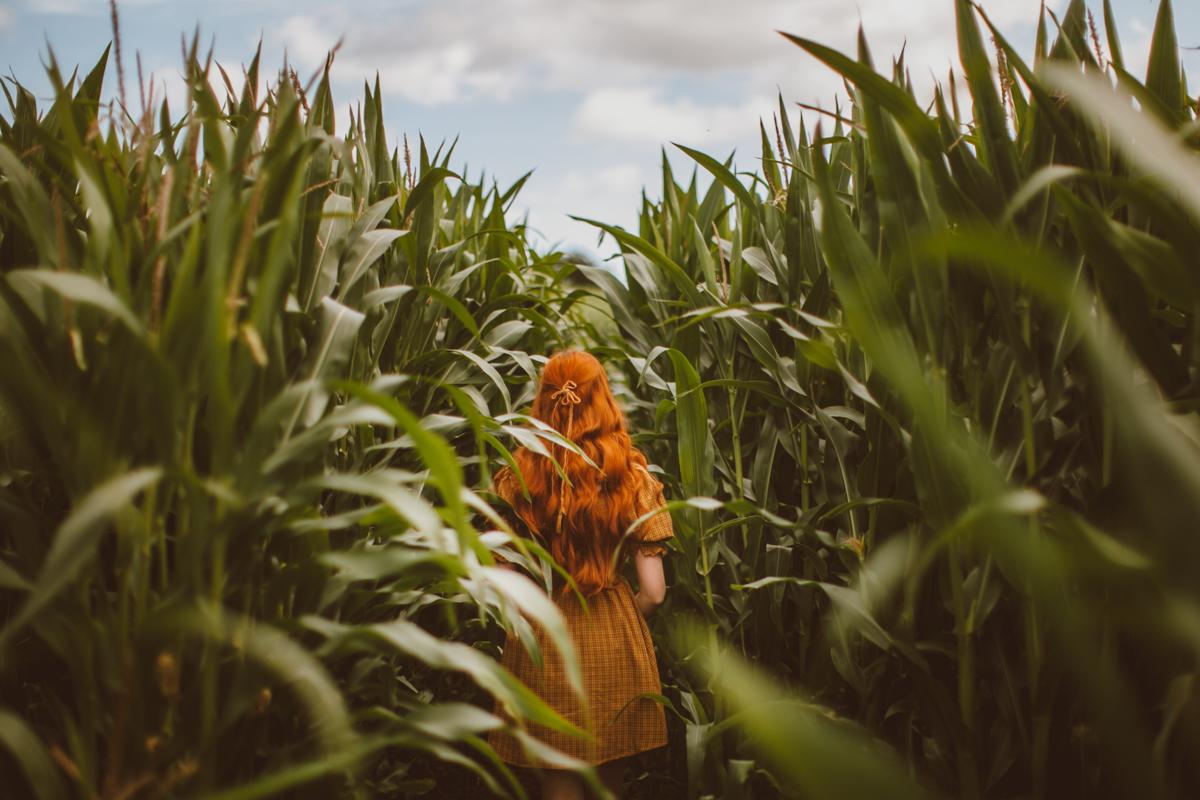 cornfield-31