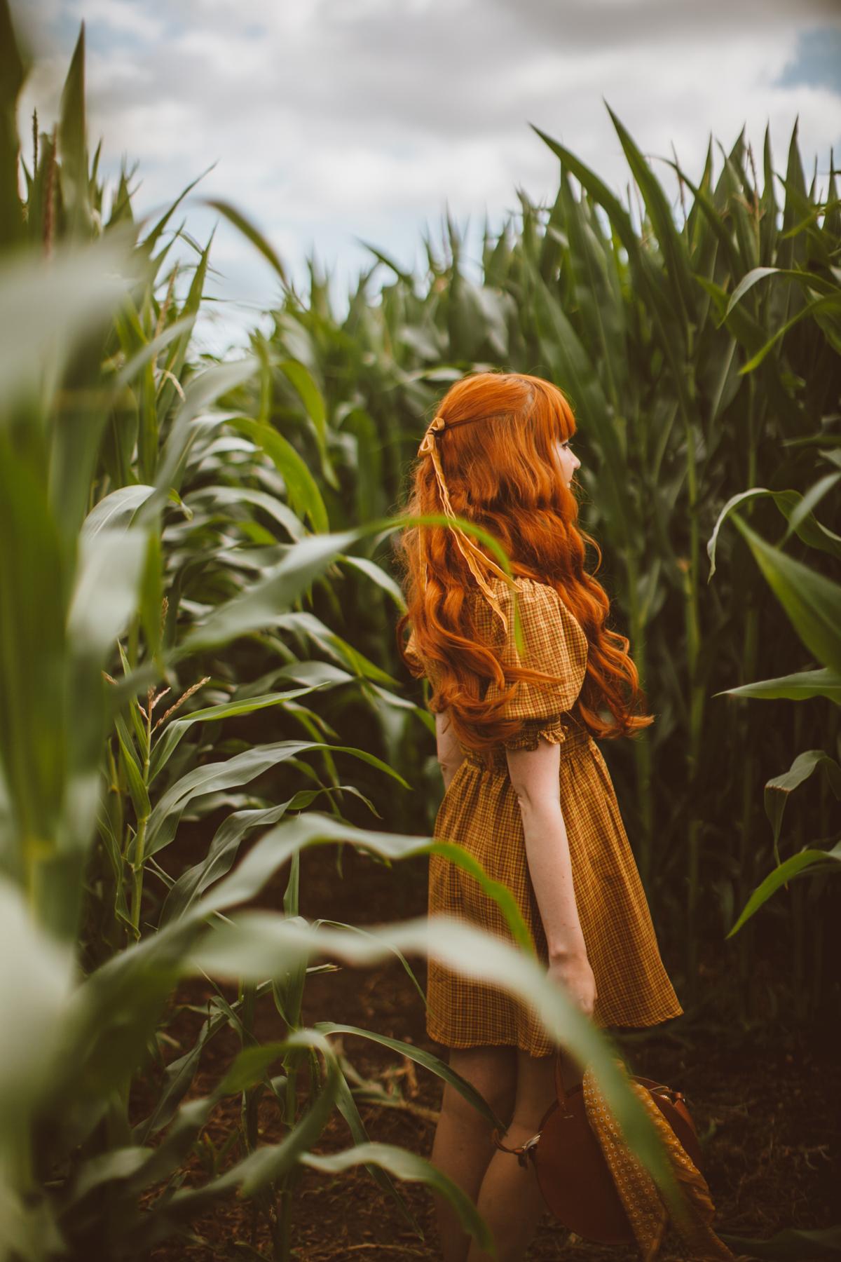 cornfield-27