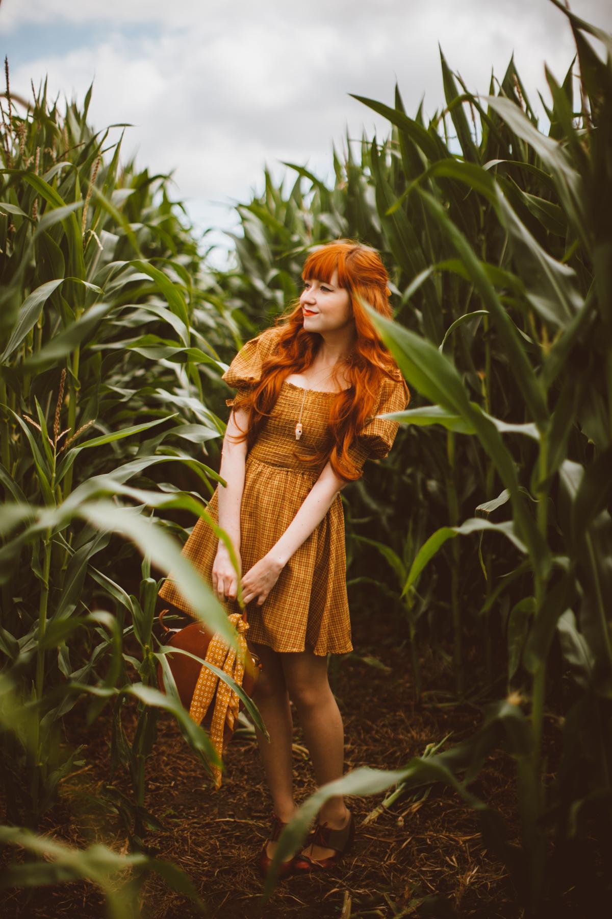 cornfield-13
