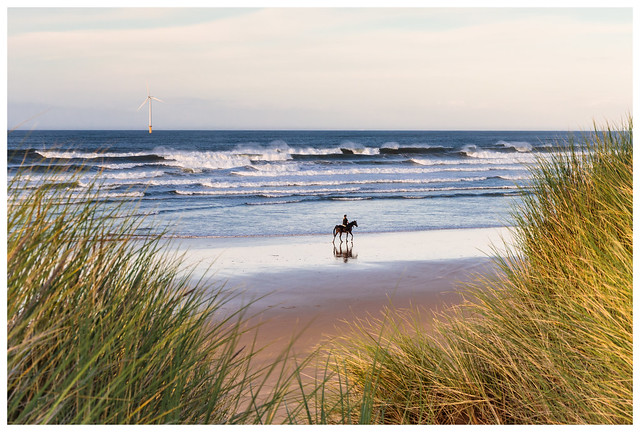 Evening Gallop on the beach
