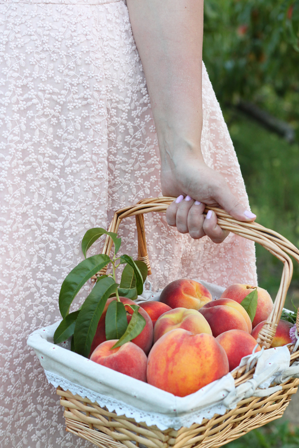 peach picking rochester ny