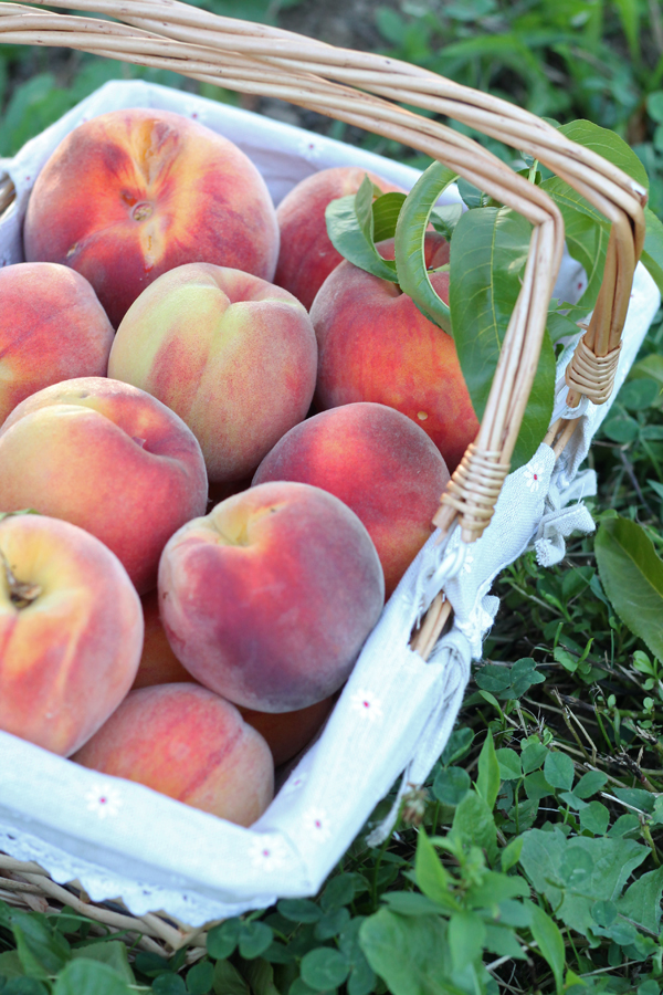 freestone peaches rochester ny