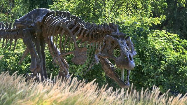 Googleplex T. rex