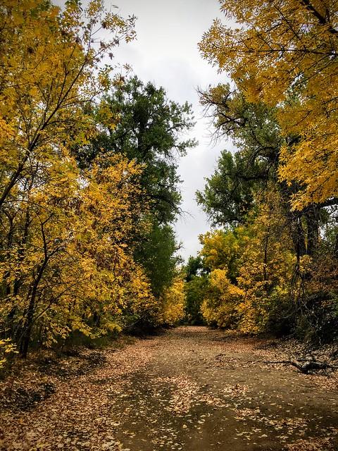 Summer Falls into Autumn