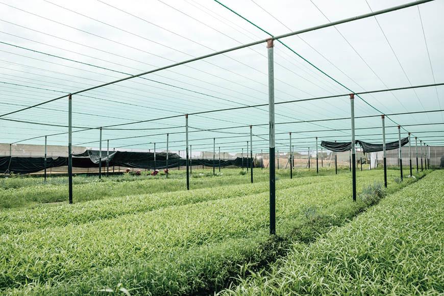 鄭文苑懂得利用菜種特性適地適種,如他發現空心菜的生長勢較強,即使夏季高溫、多雨,也能抑制雜草成長,不必擔心植株營養被分散。