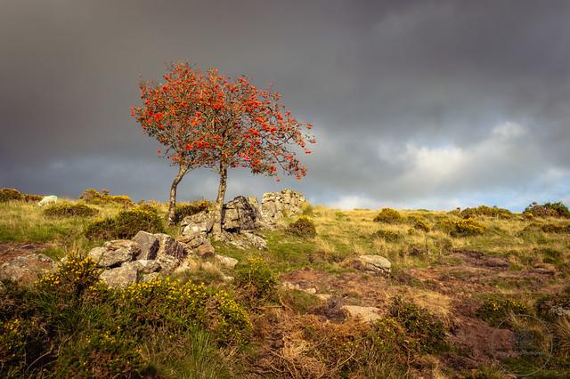 Moorland path on way to Wistman's Wood, Dartmoor National Park