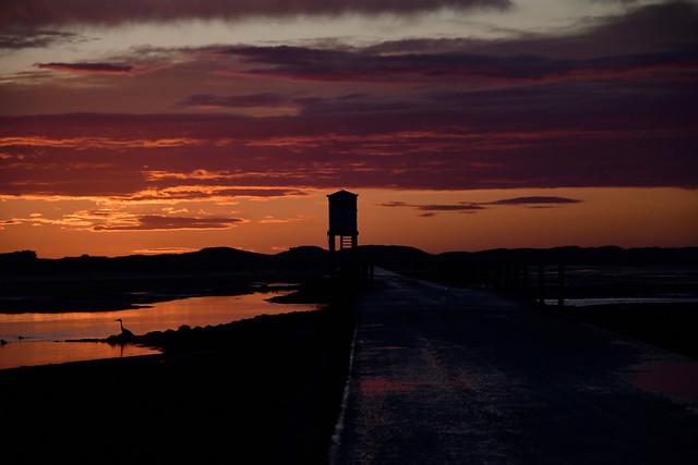 Heron at sunrise Lindisfarne