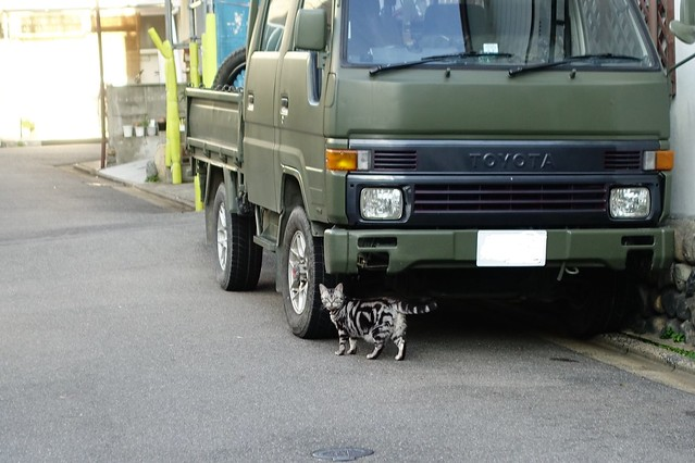 Today's Cat@2019-09-06