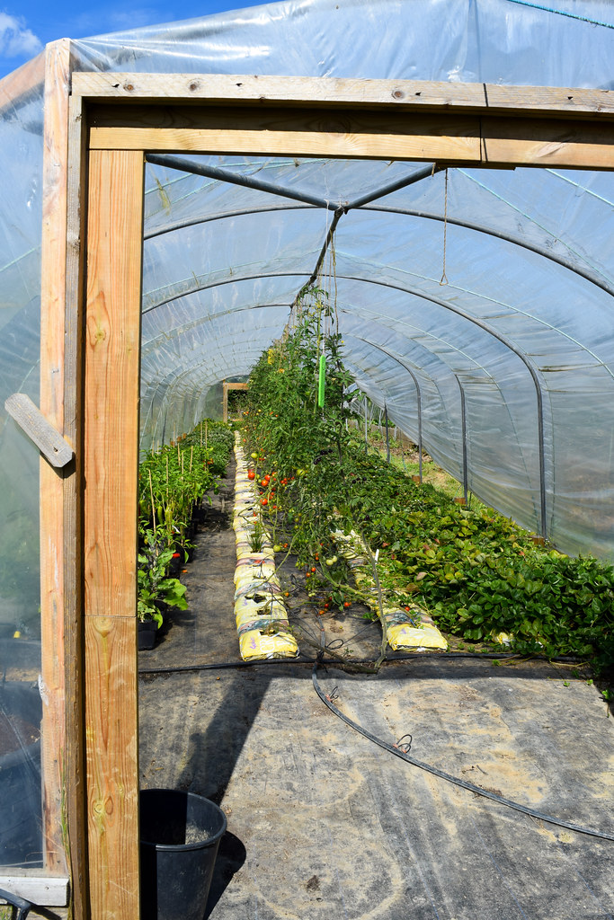 Tomato Tunnel at The Small Holding, Kilndown