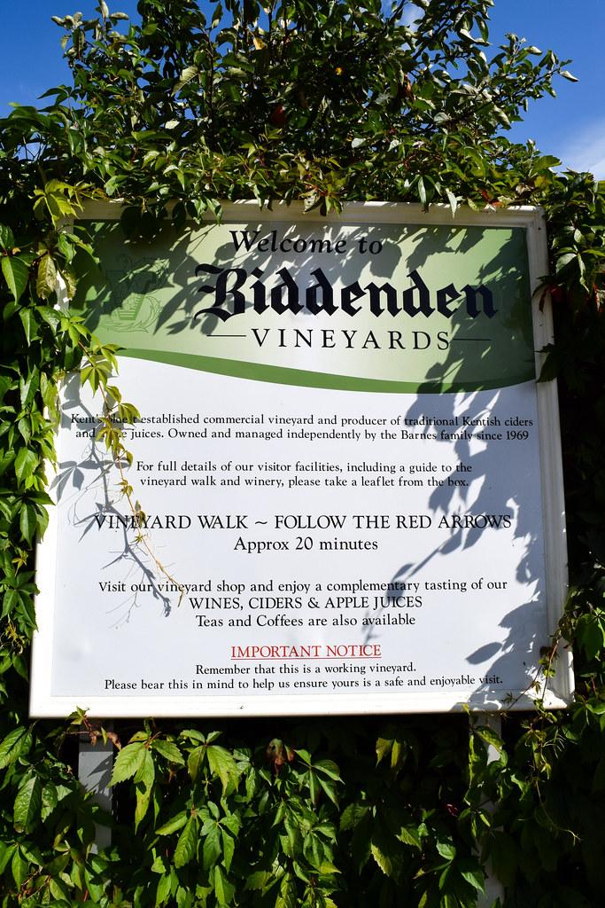 Vineyard Walk at Biddenden Vineyard