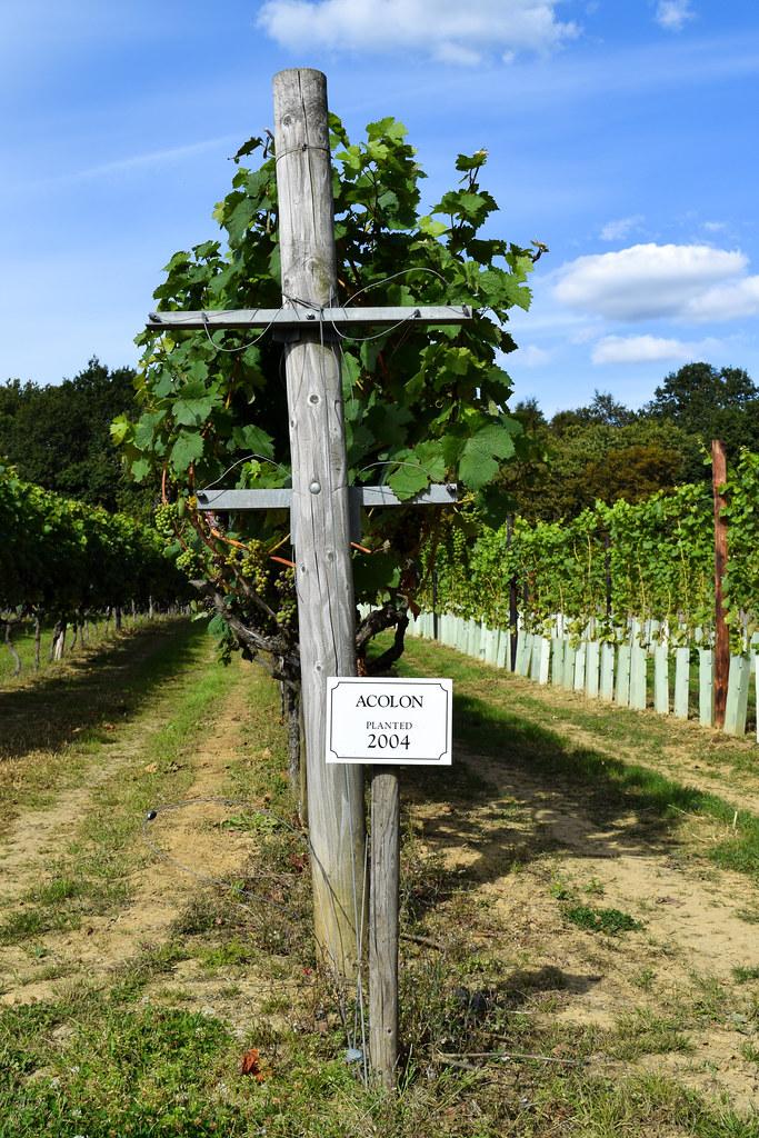 English Wine Vines at Biddenden Vineyard