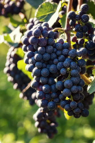 Marbled Grapes